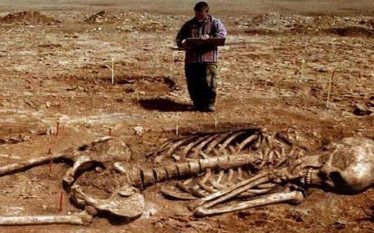 giant skeleton examined by archaeologist 2