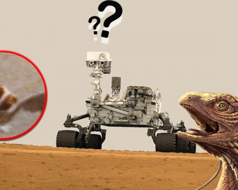horned reptile on mars