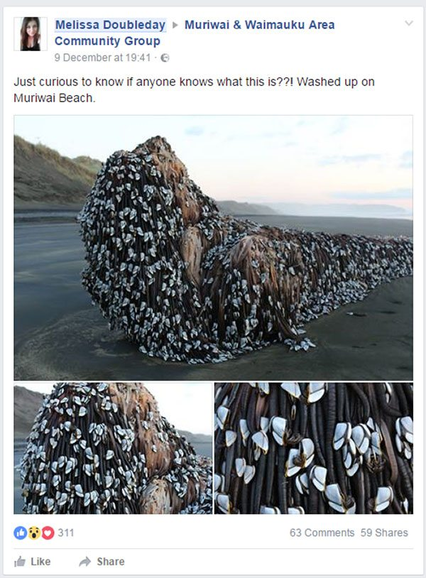 mysterious object muriwai monster