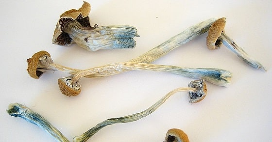 magic mushrooms dried