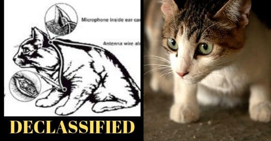 Declassified Documents: The CIA Spy Cats of the 1960s