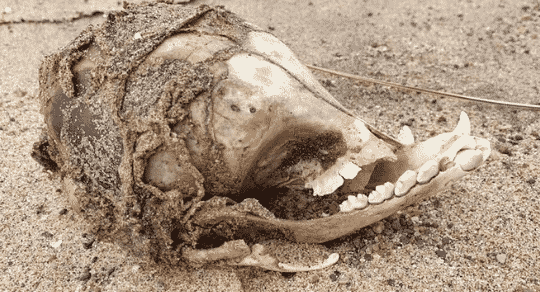 Mysterious Skull Washes Up On Beach With No Eye Sockets