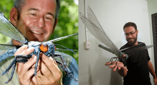 The Giant Dragonfly We Never Knew Existed Until Now